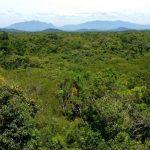 Floresta regenerada é esponja de carbono