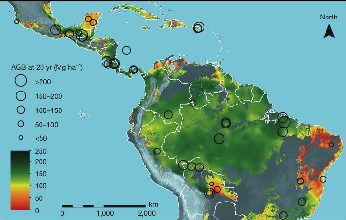 Imagem mostra velocidade de regeneração, medida em biomassa acumulada em 20 anos.Quanto maior o círculo preto, maior a taxa de crescimento da floresta
