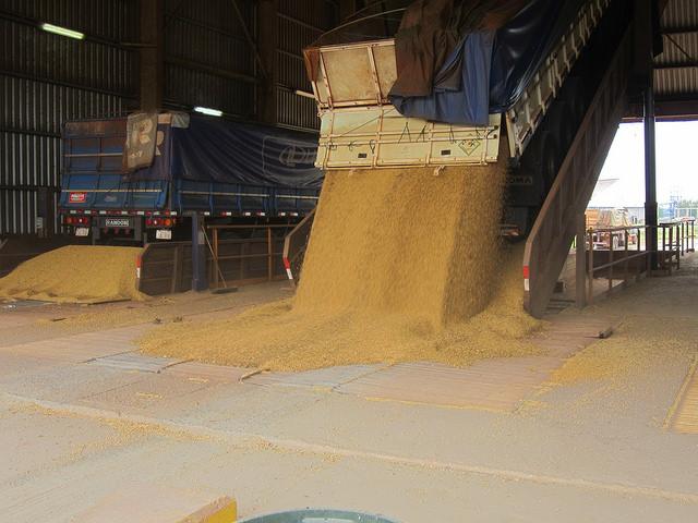 Caminhões descarregam soja no Complexo Agroindustrial Angostura SA (Caiasa). Aqui começa o percurso da soja dentro da planta industrial, até ser transformada em farinha e óleo, que são exportados em barcaças pelo rio Paraguai, desde o parque industrial de Villeta, no Paraguai. Foto: Mario Osava/IPS