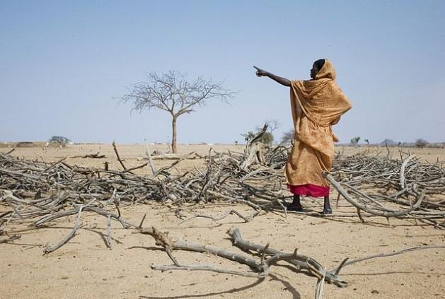 A perda de cultivos por questões climáticas agrava a insegurança alimentar nas zonas afetadas, especialmente na África. Foto: Anne Holmes/IPS
