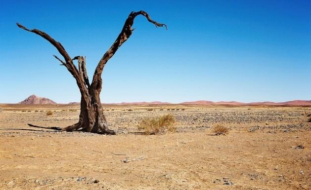 Na África há dois bilhões de hectares muito degradados pela desertificação. Foto: Bigstock/IPS