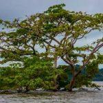 Belo Monte: depois da Inundação