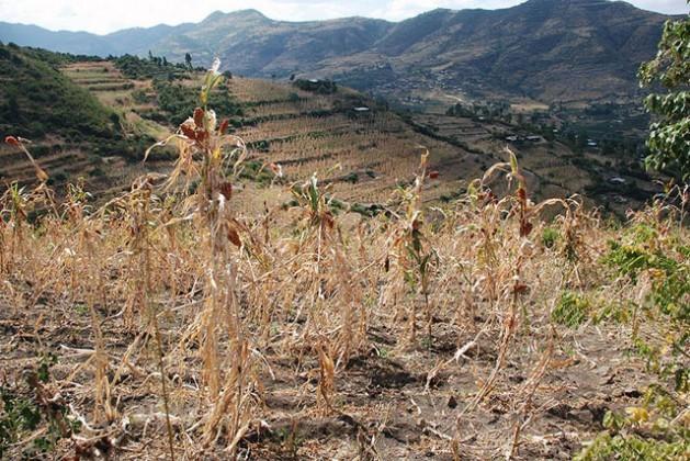 A região de Hararghe ocidental, na Etiópia, em dezembro de 2015. Cerca de 10,2 milhões de pessoas sofrem insegurança alimentar no contexto de uma das piores secas registradas nesse país africano em décadas. Foto: Stephanie Savariaud/WFP