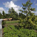 Cadeia produtiva germina no campo cubano