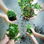 Uma política nacional de recuperação da vegetação nativa