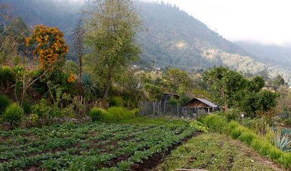 Uma propriedade de San Luis, na Guatemala. Foto: FAO Guatemala