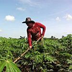 Seca expõe problemas de irrigação em Cuba