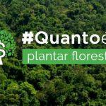 Plataforma calcula investimento para recuperar florestas