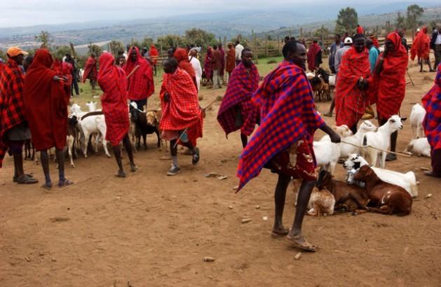 Pastores masai vendem seus animais em um mercado de Narok, no Quênia. Foto: FAO