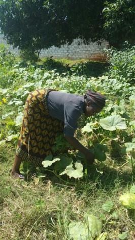 Mary Nyirenda na horta que tem em seu terreno em Livingstone, em Zâmbia. Foto: Friday Phiri/IPS