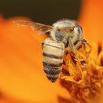 Instituto Biológico recebe curso sobre vida e manejo de abelhas nativas sem ferrão