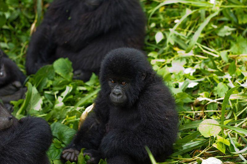 Parque Nacional de Virunga, na República Democrática do Congo, é um dos 17 patrimônios mundiais africanos ameaçados segundo levantamento da UNESCO. Foto: WikiCommons / Cai Tjeenk Willink