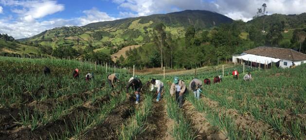 Pequenos agricultores trabalhando em uma propriedade familiar, na América Latina. Foto: Camilo Vargas/FAO