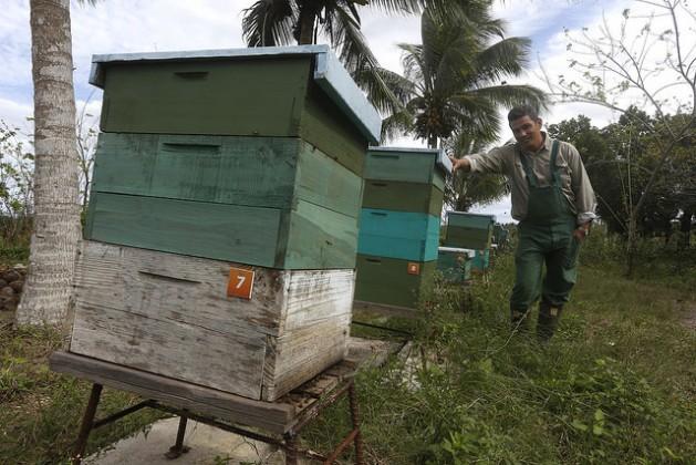 O agrônomo e ecologista Fernando Funes junto às colmeias da produção de mel orgânico na Finca Marta, em um município próximo de Havana. Explorações agrícolas como esta criam cadeias produtivas e de valor, que injetam sangue novo no campo cubano. Foto: Jorge LuisBaños/IPS