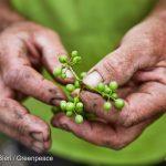 Mais de 20% de todos os agrotóxicos usados no Brasil são ilegais
