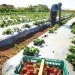 Toneladas de agrotóxicos ilegais são apreendidas