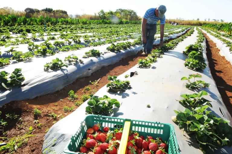 Brasil: líder mundial no uso de agrotóxicos
