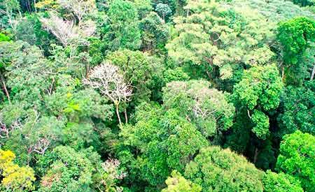 A Floresta Amazônica brasileira contará com mais 2,83 milhões de hectares em regime de conservação.Foto: Arquivo MMA