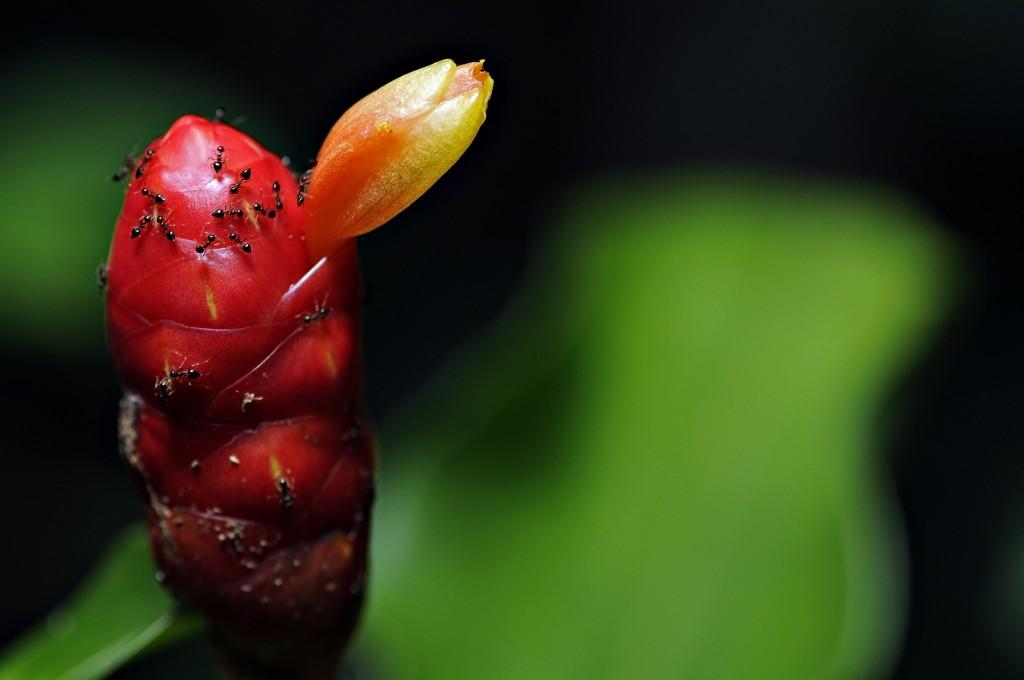 Espécie vegetal do Parque Nacional da Serra do Pardo. Foto: © Adriano Gambarini/WWF-Brasil