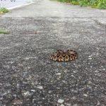 São José registra aumento significativo de serpentes na área urbana