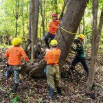 Árvores contam a história do clima na Amazônia