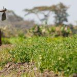 Produzir alimentos ou conservar florestas
