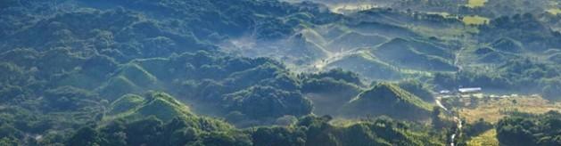 Desmatamento. Foto: FAO