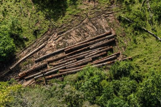 Foto: Fábio Nascimento/Greenpeace