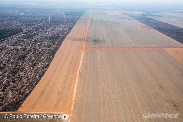 Mato Grosso lidera em desmatamento. Imagem mostra fazenda desmatada para plantio de soja. Foto: © Paulo Pereira / Greenpeace