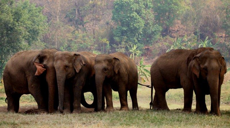 Foto: Divulgação/Santuário de Elefantes Brasil
