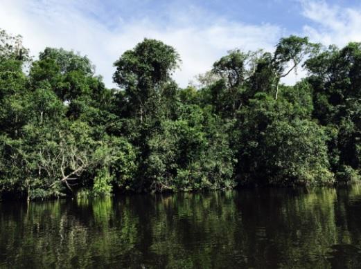 Floresta no rio Cristalino, norte de Mato Grosso. Foto: Claudio Angelo/OC