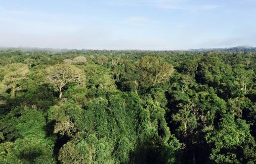 Floresta intacta no norte de Mato Grosso, região de intensa pressão madeireira e de caça. Foto: Claudio Angelo/OC