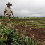 Tradição das hortas se perde em Cuba