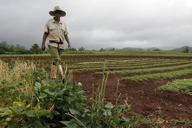 José Leyva, de 61 anos, caminha junto aos pés de feijão cultivados em sua pequena propriedade, onde convivem os cultivos para venda e a horta para autoconsumo familiar, no povoado de Horno de Guisa, na província de Granma, em Cuba. Foto: Jorge Luis Baños/IPS