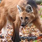 Alerta sobre falsa normalidade em ecossistemas