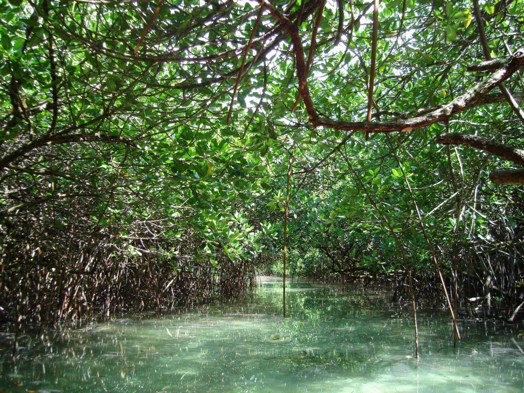 Mangues são encontrados em diversos países insulares. Na imagem, manguezal na Micronésia. Foto: Flickr (CC) / Stefan Krasowski