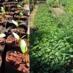 Projeto faz doação de 12 mil mudas de árvores nativas e frutíferas