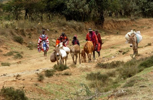 Pastores masai do Quênia levam seu gado ao mercado local. Foto: Vitale/FAO