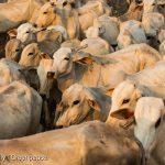 Principais supermercados do Brasil fecham o cerco contra a carne de desmatamento