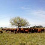 Pecuária, ameaça e oportunidade