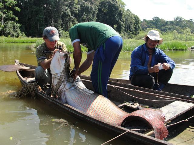 Resultado alcançado em 2015 pela iniciativa indica um cenário bastante favorável para o manejo da pesca em 2016, rumo à certificação da atividade no estado. Foto: © Silvio Francisco Lima Margarido