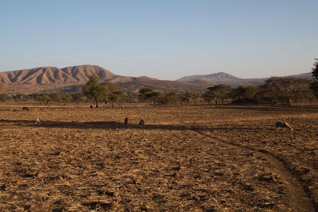 A seca associada ao fenômeno El Niño afetou severamente a comunidade Arsi, na Etiópia. Foto: Charlotte Cans/Ocha