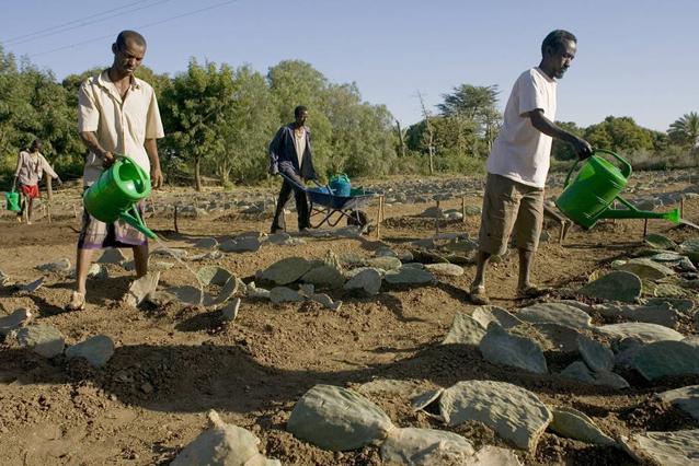 A distribuição de sementes ajuda os agricultores da Etiópia a se recuperarem depois do fenômeno climático El Niño. Foto: FAO