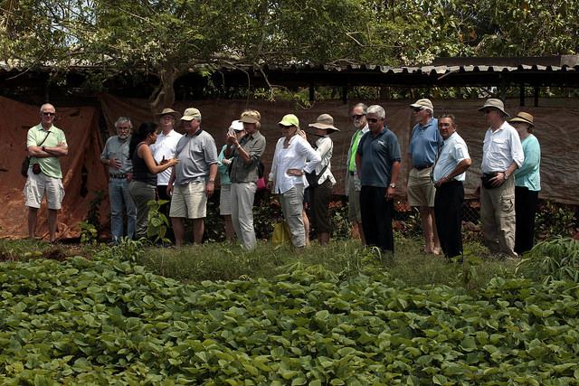 Turistas durante uma visita à Unidade Básica de Produção Cooperativa Viveiro Alamar, na área rural ao leste de Havana. O agroturismo é um novo ingrediente que alguns produtores de Cuba estão somando à sua atividade para melhorar sua renda. Foto: Jorge LuisBaños/IPS